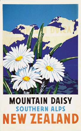 Anonym - Mountain daisy