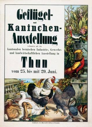 Anonym - Geflügel- und Kaninchen-Ausstellung Thun