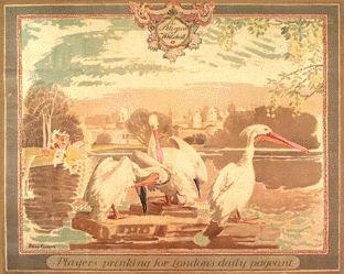 Connard Philip - Pelicans