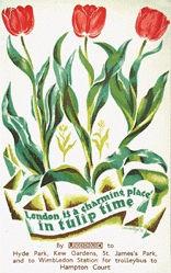 Mansbridge John - Londin in tulip time