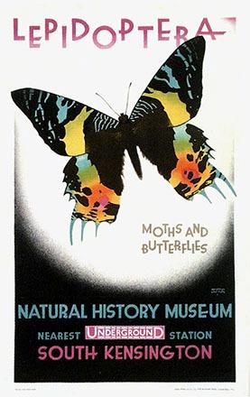 Cooper Austin - Natural History Museum
