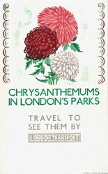 Willoughby Althea - Chrysanthemums
